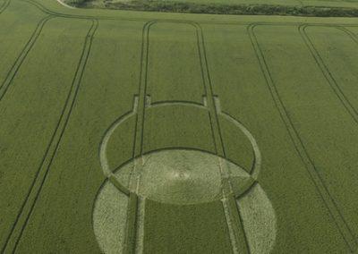 Horton, Wiltshire | 24th June 2008 | Wheat L2
