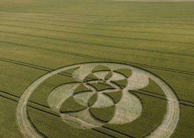 East Field Alton Barnes, Wiltshire | 9th July 2008 | Wheat L2