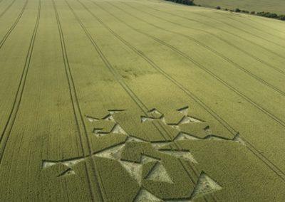 Charlbury Hill, Oxfordshire | 14th July 2008 | Wheat L2