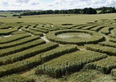 West Woods near Lockeridge, Wiltshire | 17th July 2008 | Wheat P2
