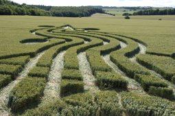 West Woods near Lockeridge, Wiltshire | 17th July 2008 | Wheat P3