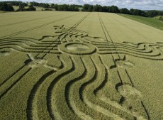 West Woods near Lockeridge, Wiltshire | 17th July 2008 | Wheat CL2
