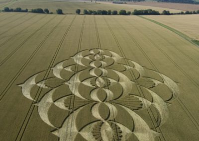 Southfield Alton Priors, Wiltshire | 22nd July 2008 | Wheat L