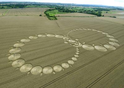 Milk Hill, Wiltshire | 8th August 2008 | Wheat L2