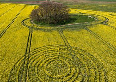 The Ridgeway, Wiltshire   14th April 2009   Oilseed Rape L2