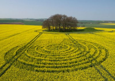 The Ridgeway, Wiltshire | 14th April 2009 | Oilseed Rape L