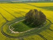 The Ridgeway, Wiltshire | 14th April 2009 | Oilseed Rape L4