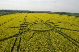 Avebury Rutlands Farm, Wiltshire   23rd April 2009   Oilseed Rape LOW