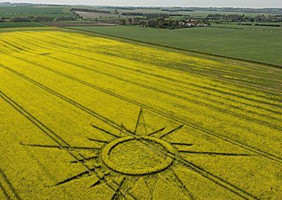 Avebury Rutlands Farm, Wiltshire   23rd April 2009   Oilseed Rape L2