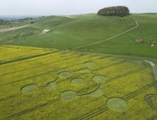 Morgans Hill, Wiltshire   24th April 2009   Oilseed Rape L2