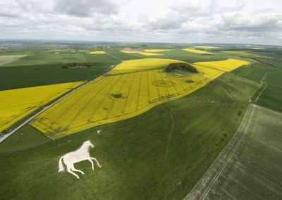 Roundway Hill, Wiltshire | 29th April 2009 | Oilseed Rape L6