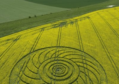 Roundway Hill, Wiltshire | 29th April 2009 | Oilseed Rape L