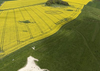 Roundway Hill, Wiltshire | 29th April 2009 | Oilseed Rape L5