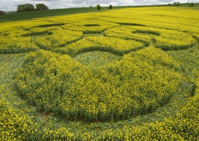 East Kennett Long Barrow, Wiltshire | 3rd May 2009 | Oilseed Rape LOW5