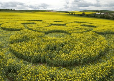 East Kennett Long Barrow, Wiltshire | 3rd May 2009 | Oilseed Rape LOW3