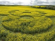 East Kennett Long Barrow, Wiltshire   3rd May 2009   Oilseed Rape LOW3