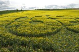 East Kennett Long Barrow, Wiltshire   3rd May 2009   Oilseed Rape LOW4