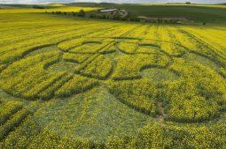 East Kennett Long Barrow, Wiltshire   3rd May 2009   Oilseed Rape LOW2