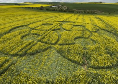 East Kennett Long Barrow, Wiltshire | 3rd May 2009 | Oilseed Rape LOW2