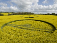 Clatford, Wiltshire   4th May 2009   Oilseed Rape LOW5