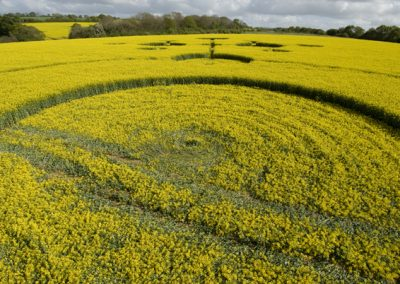 Clatford, Wiltshire | 4th May 2009 | Oilseed Rape LOW6