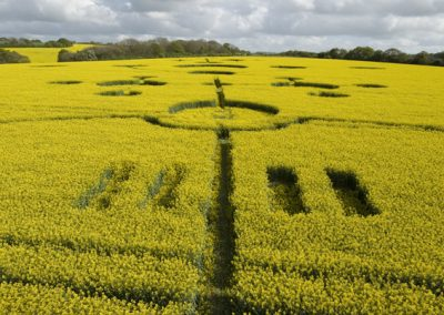 Clatford, Wiltshire | 4th May 2009 | Oilseed Rape LOW2