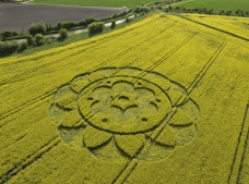All Cannings Bridge, Wiltshire | 6th May 2009 | Oilseed Rape L3