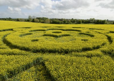 All Cannings Bridge, Wiltshire   6th May 2009   Oilseed Rape LOW