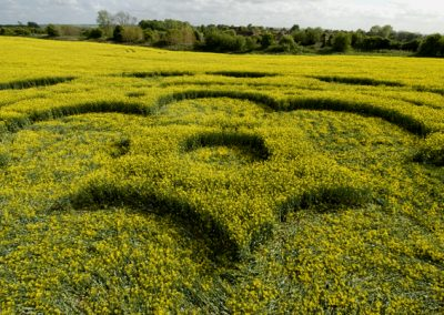 All Cannings Bridge, Wiltshire   6th May 2009   Oilseed Rape LOW3