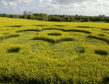 All Cannings Bridge, Wiltshire   6th May 2009   Oilseed Rape LOW2