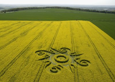 Roundway Hill, Wiltshire | 10th May 2009 | Oilseed Rape L