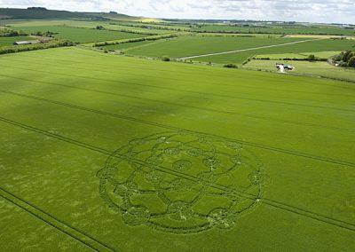 Wroughton, Wiltshire   24th May 2009   Barley L2