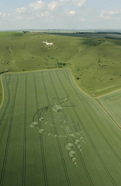 Alton Barnes White Horse, Wiltshire   21st June 2009   Wheat L2