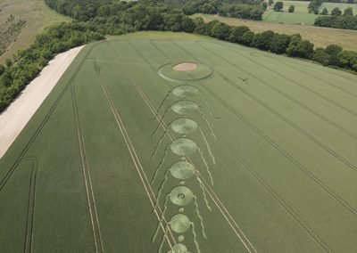 Martinsell Hill, Wiltshire   25th June 2009   Wheat LO