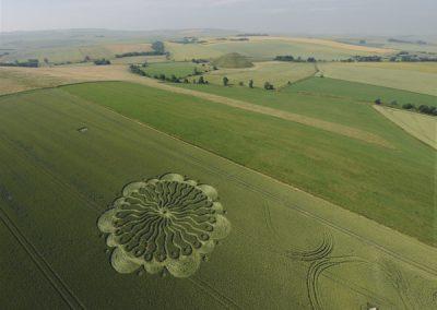 Waden Hill Avebury, Wiltshire   1st July 2009   Wheat L4