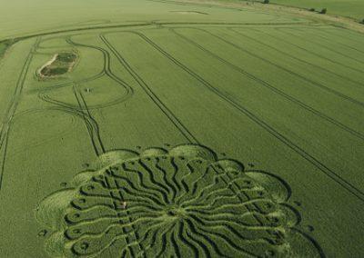 Waden Hill Avebury, Wiltshire   1st July 2009   Wheat L2