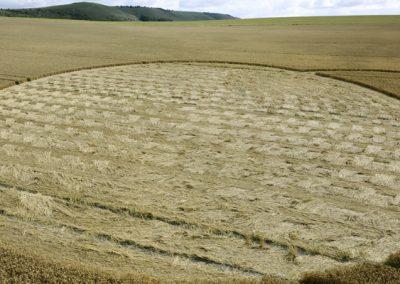 East Field Alton Barnes, Wiltshire   14th July 2009   Wheat G