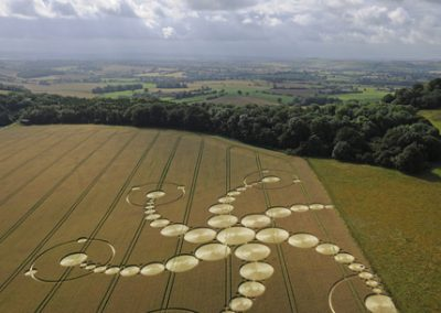 Martinsell Hill, Wiltshire   19th July 2009   Wheat L2