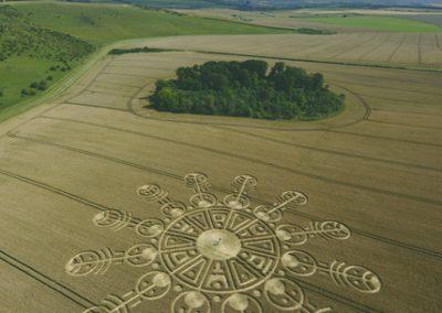 Smeathes Plantation, Wiltshire   24th July 2009   Wheat L