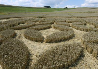 Morgans Hill, Wiltshire   2nd August 2009   Wheat LOW6
