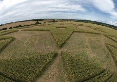 Chisbury Ring near Chisbury, Wiltshire | 3rd July 2010 | Wheat P4