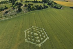 Danebury Ring near Andover, Hampshire | 6th July 2010 | Wheat L2
