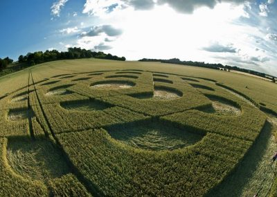 Danebury Ring near Andover, Hampshire | 6th July 2010 | Wheat P