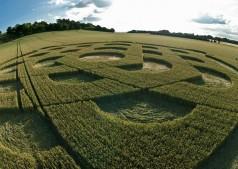 Danebury Ring near Andover, Hampshire | 6th July 2010 | Wheat P