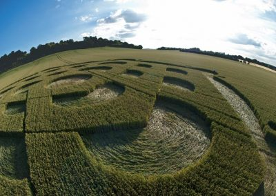 Danebury Ring near Andover, Hampshire | 6th July 2010 | Wheat P2