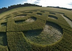 Danebury Ring near Andover, Hampshire | 6th July 2010 | Wheat P2