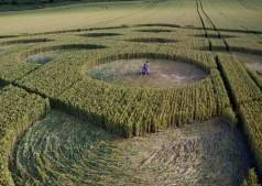 Danebury Ring near Andover, Hampshire | 6th July 2010 | Wheat P3