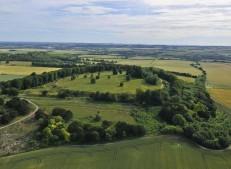 Danebury Ring near Andover, Hampshire | 6th July 2010 | Wheat L3