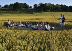 Danebury Ring near Andover, Hampshire | 6th July 2010 | Wheat FG