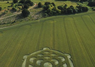 Danebury Ring near Andover, Hampshire | 6th July 2010 | Wheat L